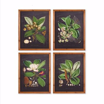 Picture of BOTANICAL CUTTINGS STUDY, SET OF 4