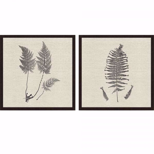 Picture of MODERN FERNS I - (SET OF 2)