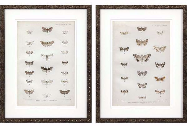 Picture of LEPIDOPTERA (SET OF 2)
