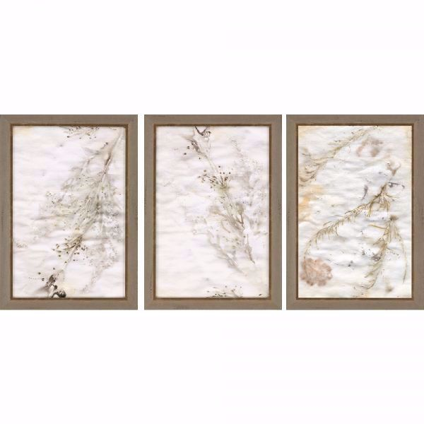 Picture of NATURE I (SET OF 3)