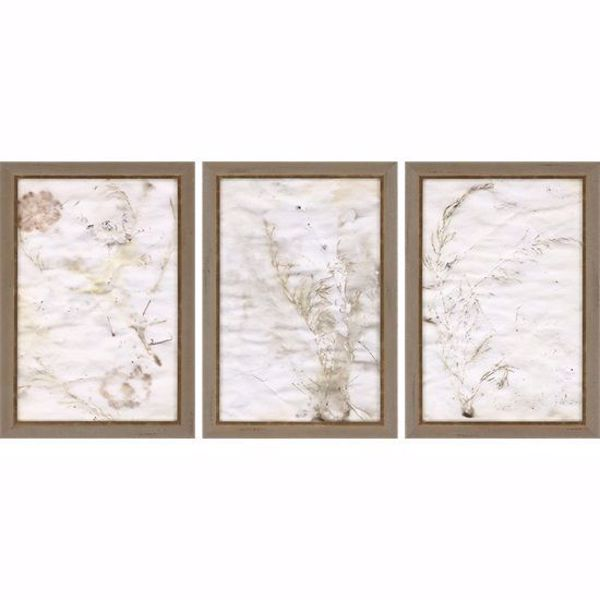 Picture of NATURE II (SET OF 3)