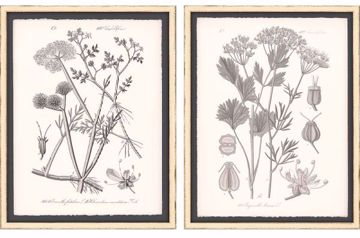 Picture of GREY BOTANICALS I (SET OF 2)