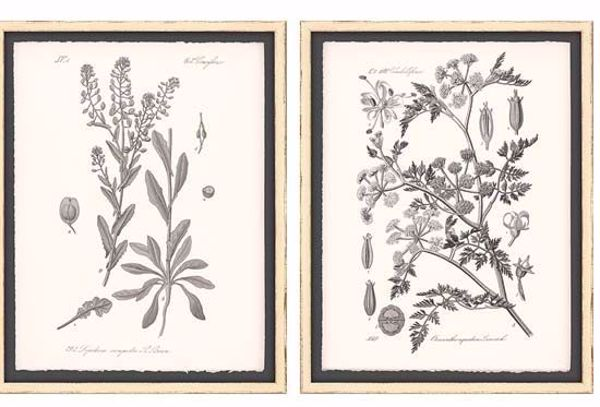 Picture of GREY BOTANICALS II (SET OF 2)
