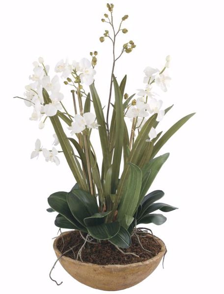 Picture of MOTH ORCHID PLANTER
