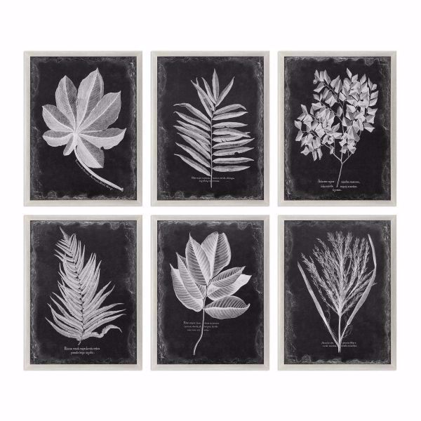Picture of FOLIAGE FRAMED PRINTS, S/6