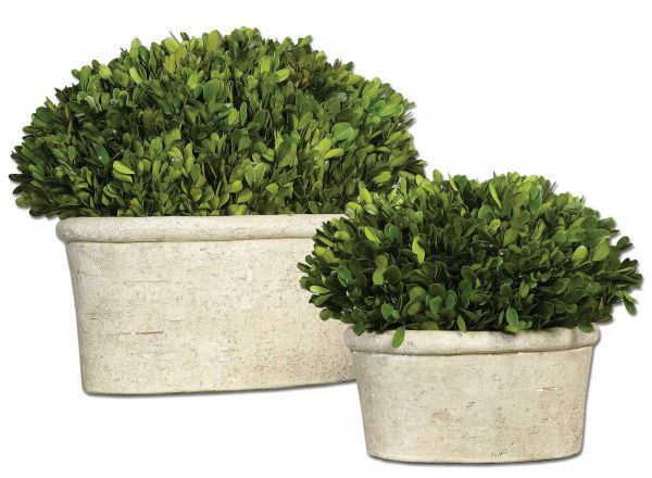 Picture of BOXWOOD OVAL DOMES SET