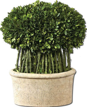Picture of BOXWOOD WILLOW TOPIARY