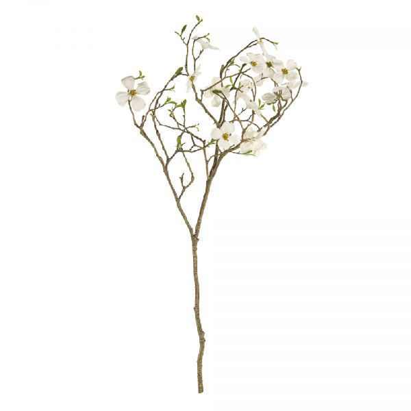 Picture of DOGWOOD BLOSSOM BRANCH