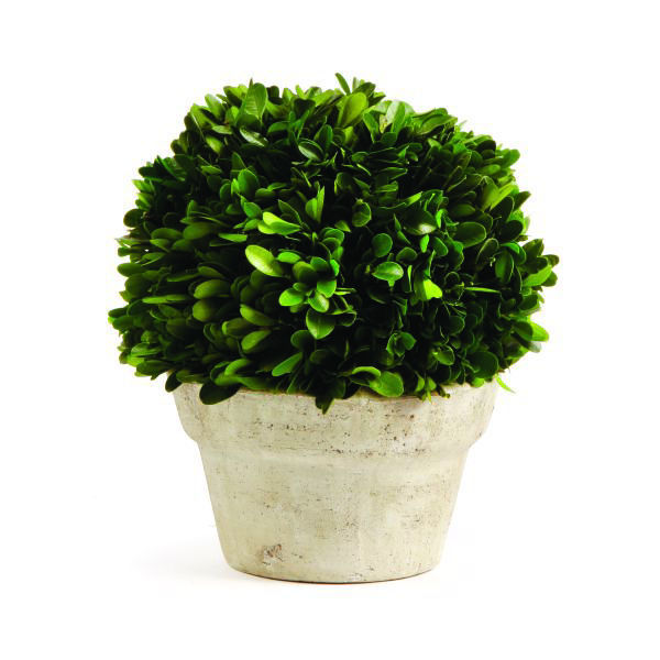 Picture of MEDIUM BOXWOOD BALL IN POT