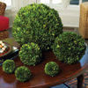 "Picture of PRESERVED BOXWOOD 10"" BALL"