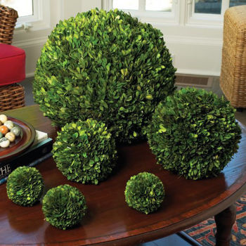 """Picture of PRESERVED BOXWOOD 10"""" BALL"""