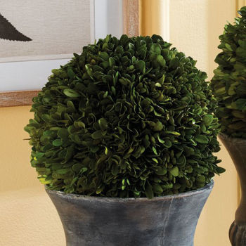 """Picture of PRESERVED BOXWOOD 8"""" BALL"""