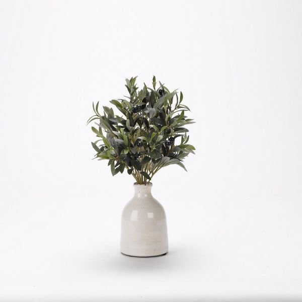 Picture of OLIVE BRANCHES IN SHORT BOTTLE