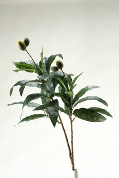 Picture of GREEN MANGO STEM