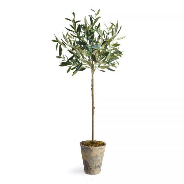 """Picture of POTTED 30"""" OLIVE TREE"""